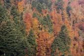 "Predstavljena inicijativa ""Zasadi drvo, ne budi panj"""